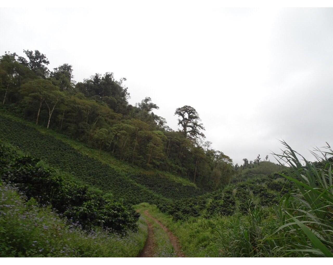 La Huella – Nicaragua