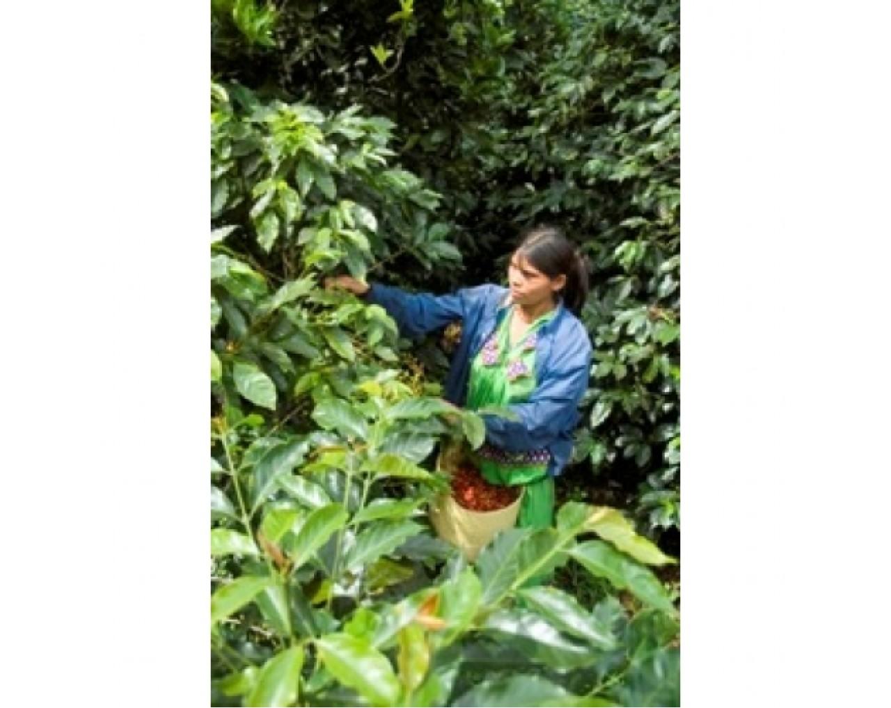 Hacienda La Minita El Conquistador - Costa Rica