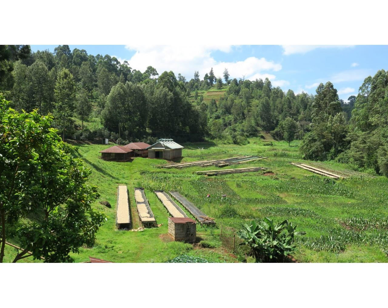 Thuti - Kenya